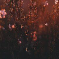 Lyng i solskinn, fotokunst veggbilde / plakat av Tor Arne Hotvedt