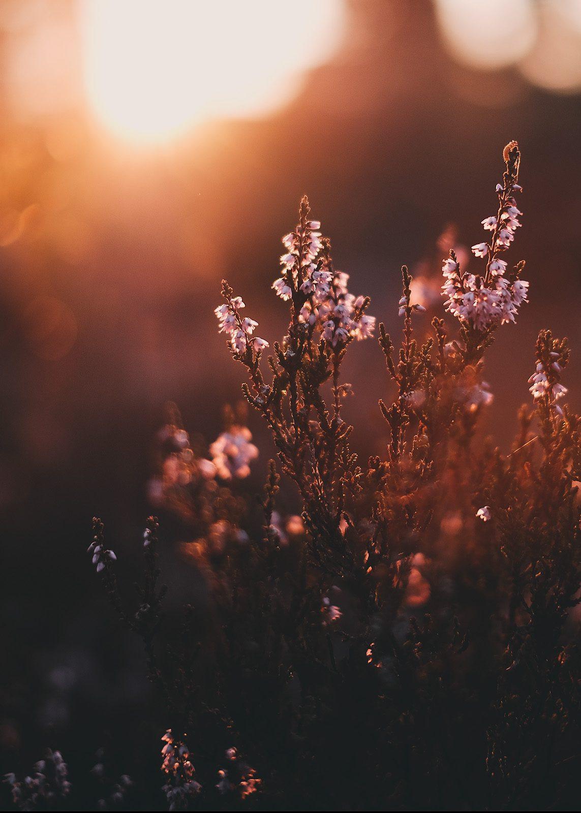 Lyng i solskinn av Tor Arne Hotvedt