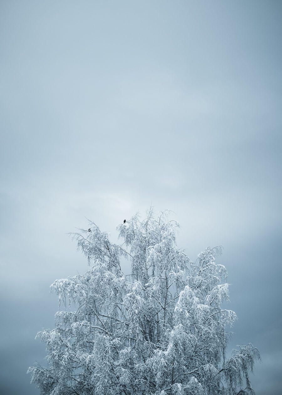 Frost av Tor Arne Hotvedt