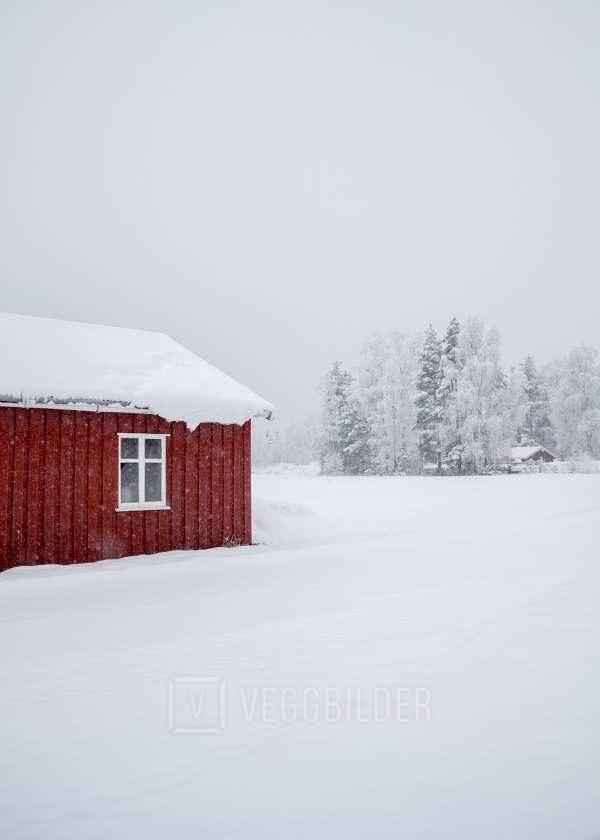 Rødt og hvitt av Tor Arne Hotvedt