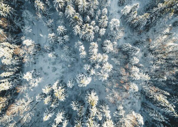 Snøkledde trær sett ovenfra, fotokunst veggbilde / plakat av Tor Arne Hotvedt