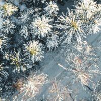 Snøkledde trær og skiløype sett ovenfra, fotokunst veggbilde / plakat av Tor Arne Hotvedt