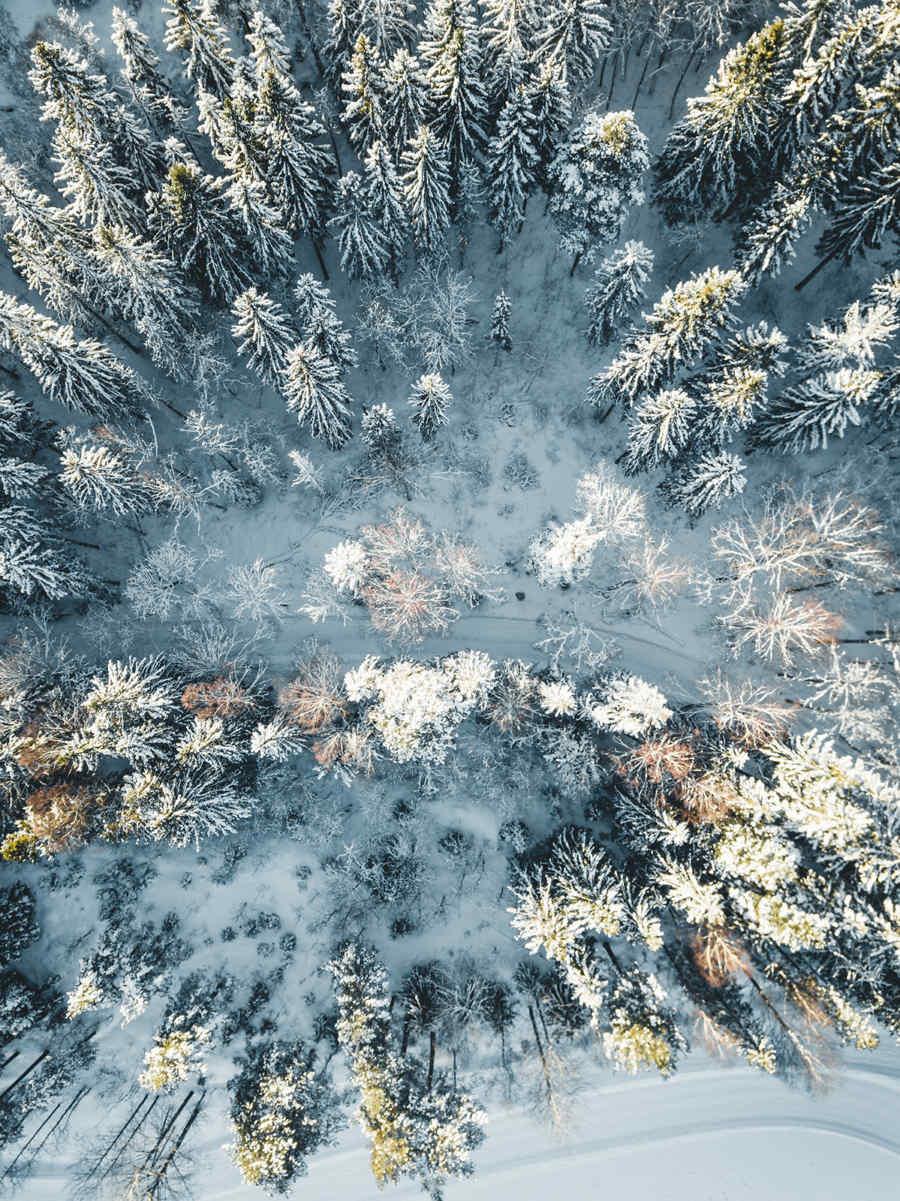 Vinter i Nordmarka III av Tor Arne Hotvedt