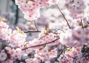Hvite blomster og grønne blader, fotokunst veggbilde / plakat av Tor Arne Hotvedt