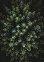 Bjørkeskog kontraster, fotokunst veggbilde / plakat av Peder Aaserud Eikeland