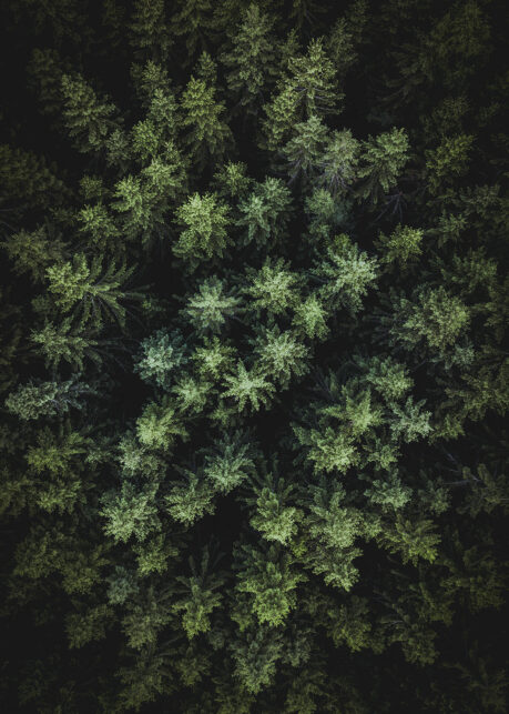 Over skogen av Tor Arne Hotvedt