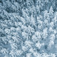 Snøkledde trær sett ovenfra., fotokunst veggbilde / plakat av Tor Arne Hotvedt