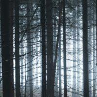 Tåkefull, mørk skog, fotokunst veggbilde / plakat av Tor Arne Hotvedt