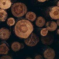 En stor stabel med tømmerstokker etter tynningen av skogen rundt Sognsvann i Oslo., fotokunst veggbilde / plakat av Tor Arne Hotvedt