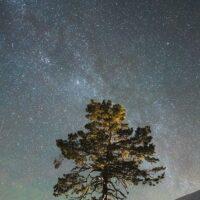 Et tre under stjernehimmelen, fotokunst veggbilde / plakat av Tor Arne Hotvedt