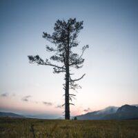 Et enslig tre i solnedgang, fotokunst veggbilde / plakat av Tor Arne Hotvedt