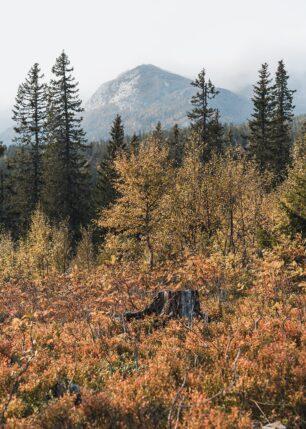 Fine høstfarger på fjellet, fotokunst veggbilde / plakat av Tor Arne Hotvedt