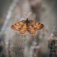 Makrobilde av en sommerfugl som lyses opp av sola, fotokunst veggbilde / plakat av Tor Arne Hotvedt