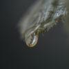 En vanndråpe som er i ferd med å falle, fotokunst veggbilde / plakat av Tor Arne Hotvedt
