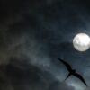 Mørke fugler av Terje Kolaas