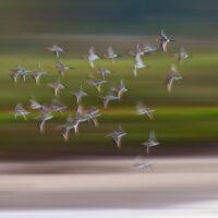 Fugler på trekk, fotokunst veggbilde / plakat av Terje Kolaas