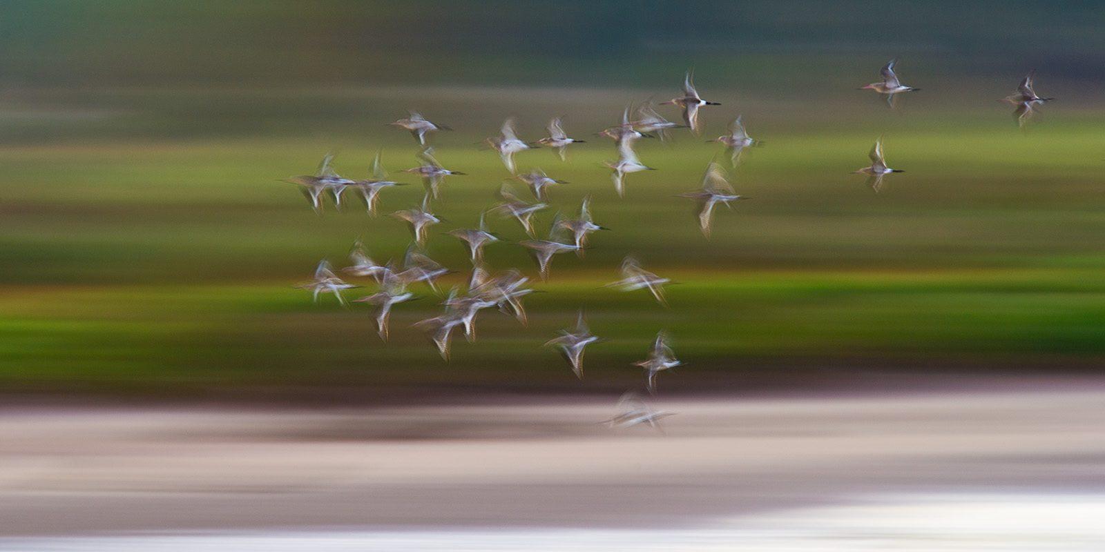 Fugler på trekk av Terje Kolaas