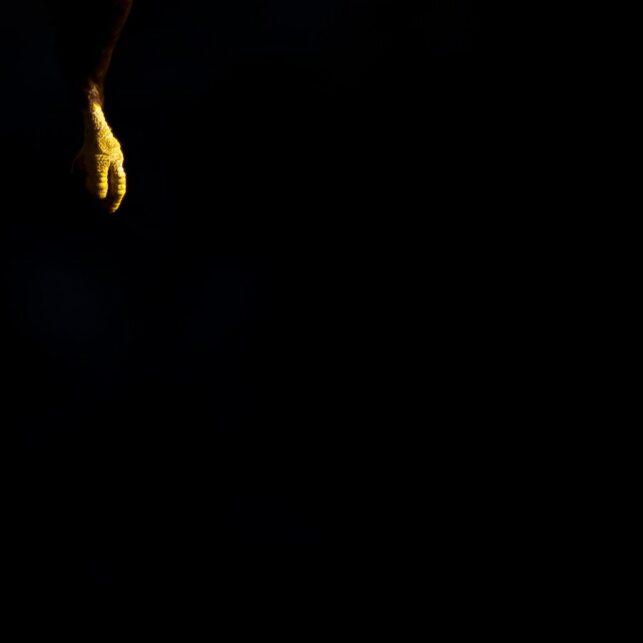 Havørn i svart, fotokunst veggbilde / plakat av Terje Kolaas