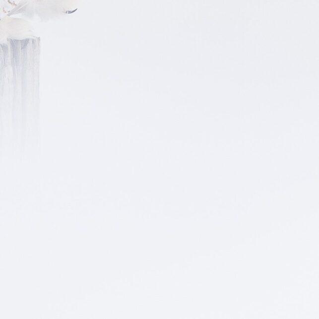 Snøhvit snøugle med lukkede øyne, tilsynelatende i bønn, fotokunst veggbilde / plakat av Terje Kolaas