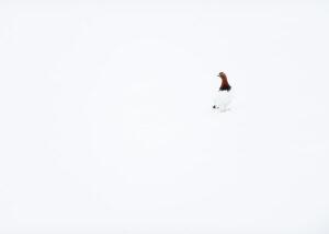 langeksponering rennende elv, fotokunst veggbilde / plakat av Kristoffer Vangen