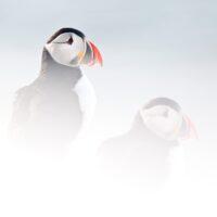 To lunder sitter i snøen og venter på vår, fotokunst veggbilde / plakat av Terje Kolaas