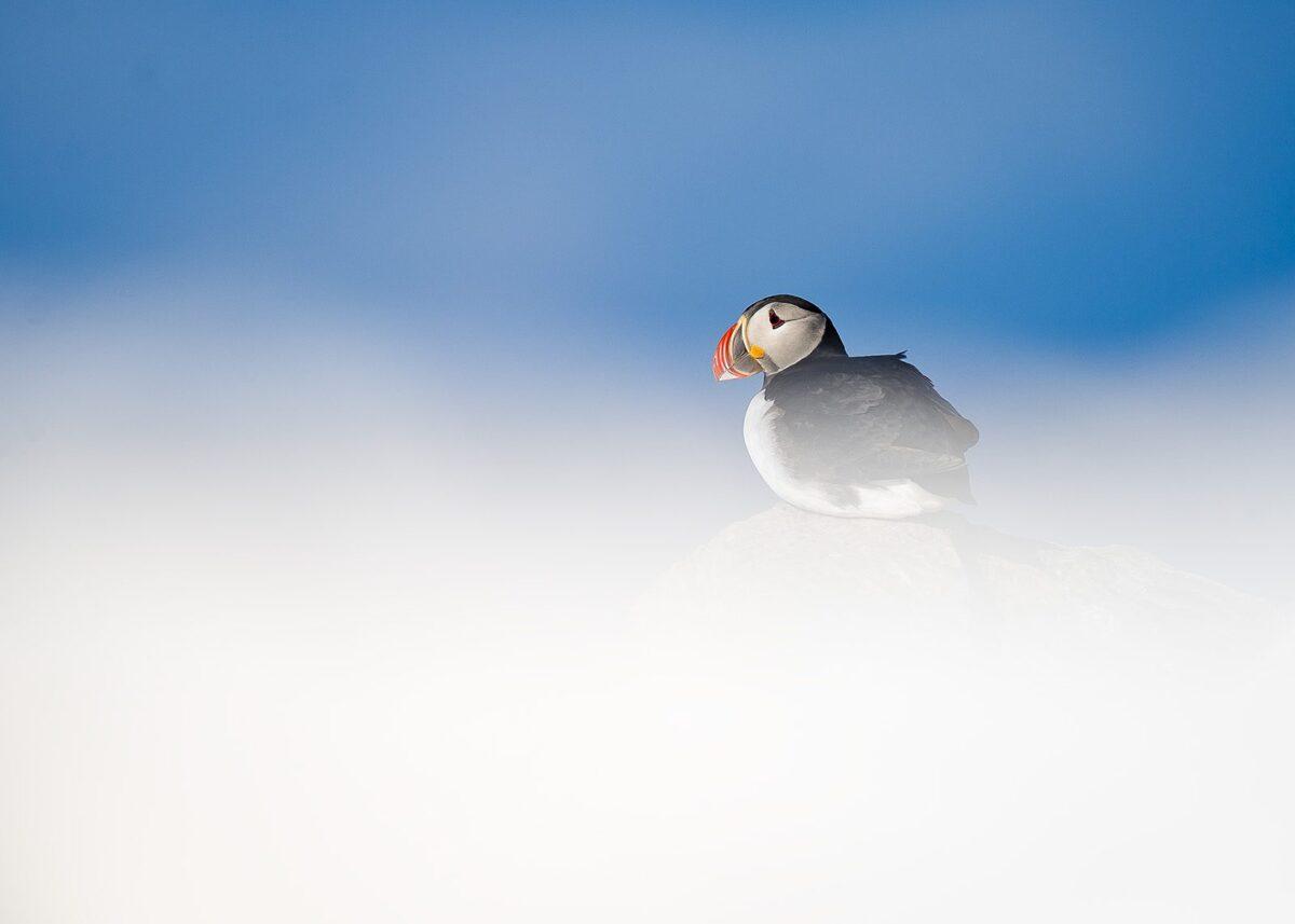 Lunde i snø, fotokunst veggbilde / plakat av Terje Kolaas