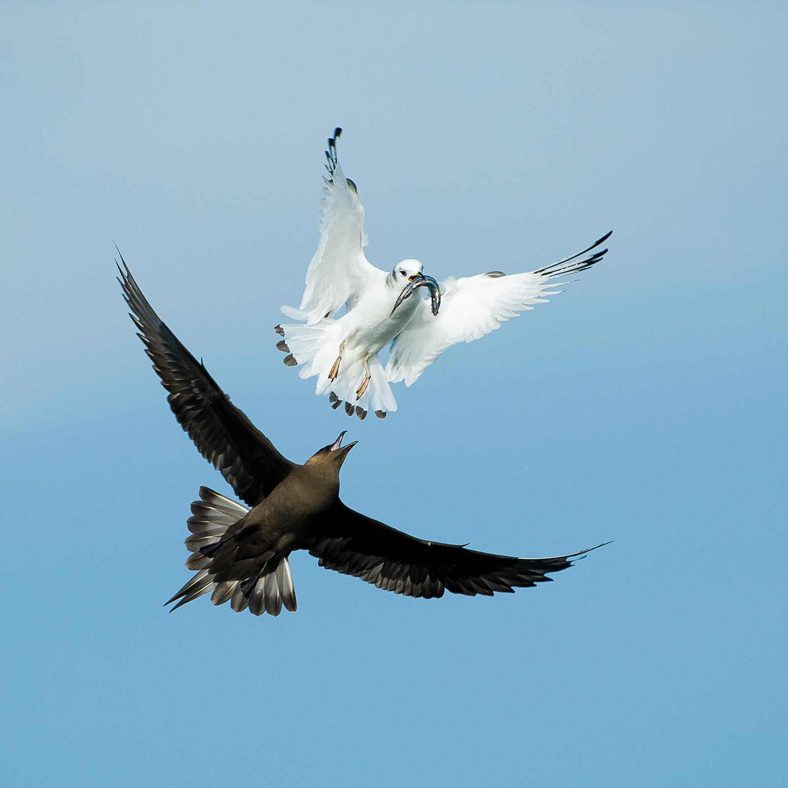 Luftkamp av Terje Kolaas