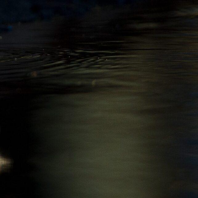 Linerle, fotokunst veggbilde / plakat av Terje Kolaas