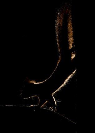 Ekornets omriss II, fotokunst veggbilde / plakat av Terje Kolaas