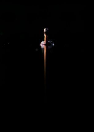 Horndykker på skyggevann, fotokunst veggbilde / plakat av Terje Kolaas