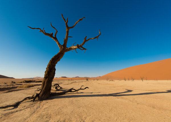Trær i ørkensand II, fotokunst veggbilde / plakat av Terje Kolaas