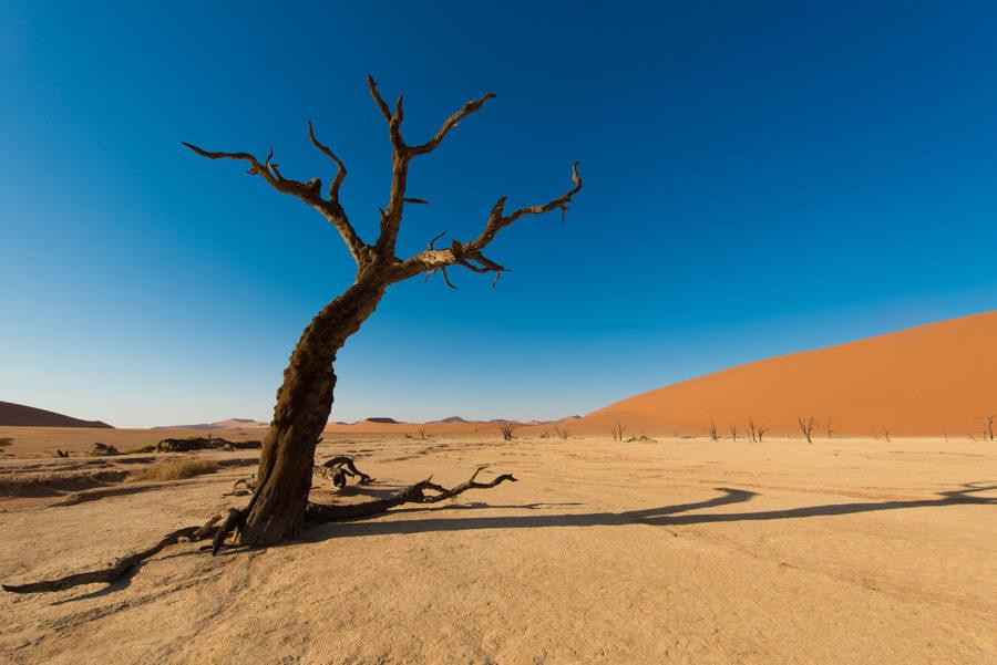 Trær i ørkensand II av Terje Kolaas