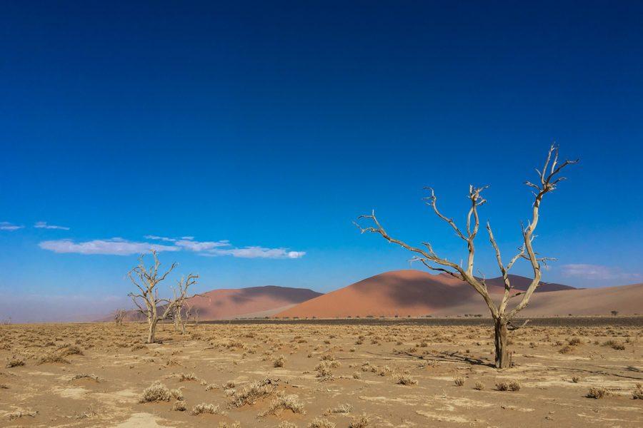 Ørkenskog I av Terje Kolaas