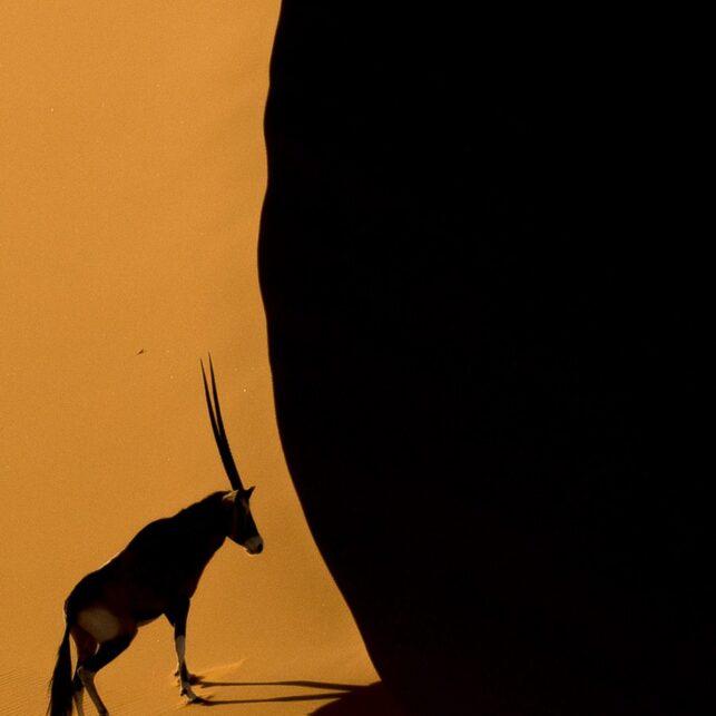 Oryx i ørkenen, fotokunst veggbilde / plakat av Terje Kolaas