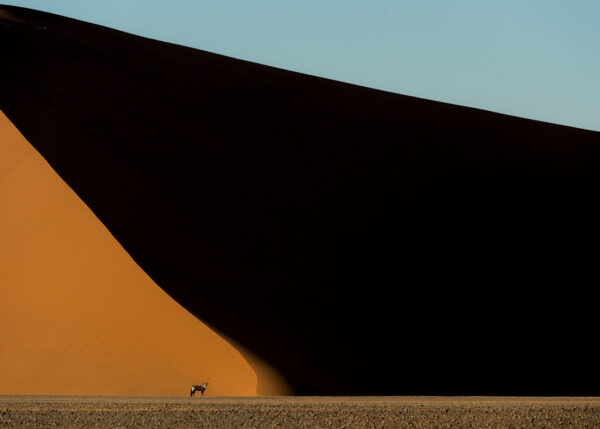 Liten oryx i stort landskap av Terje Kolaas