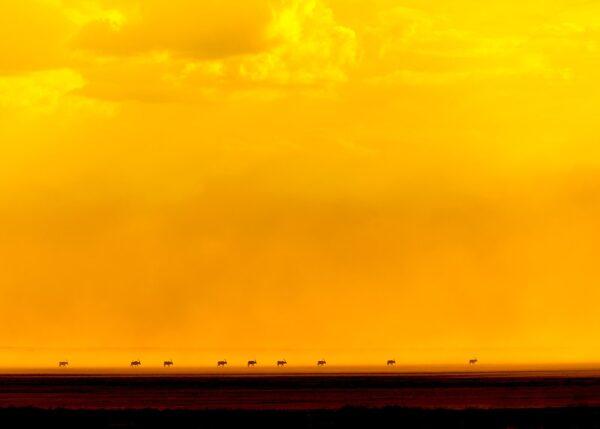 Oryxer mot glødende himmel II, fotokunst veggbilde / plakat av Terje Kolaas