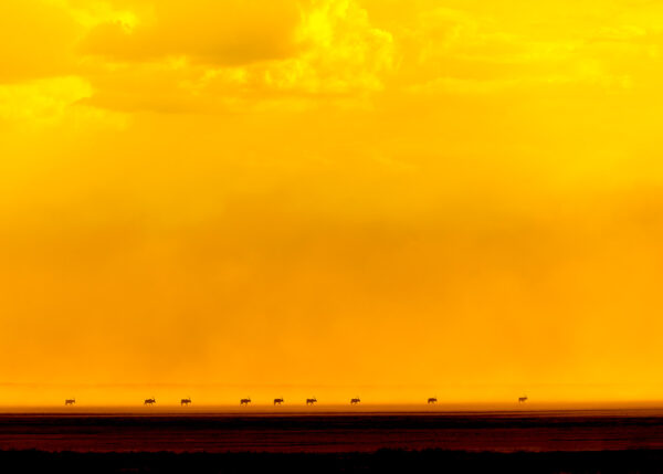 Oryxer mot glødende himmel II av Terje Kolaas