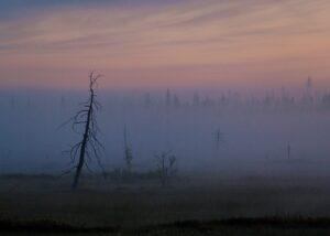 Høstfarget tre i morgentåke II, fotokunst veggbilde / plakat av Terje Kolaas
