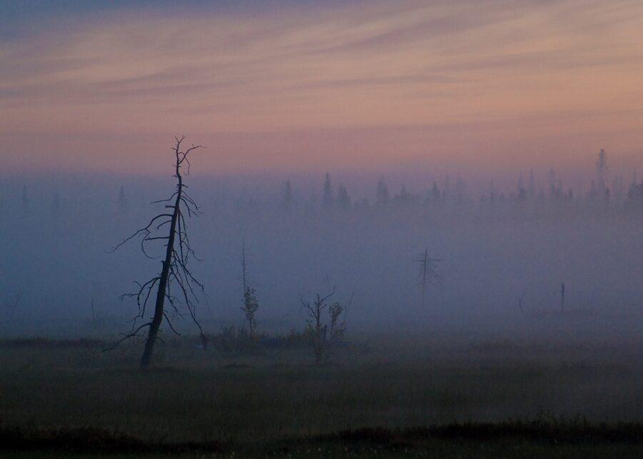 Morgentåke i Finnmark av Terje Kolaas