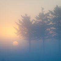 Vintersol på Jæren av Terje Kolaas