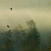 Tåkefugler, fotokunst veggbilde / plakat av Terje Kolaas