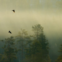 Tåkefugler av Terje Kolaas