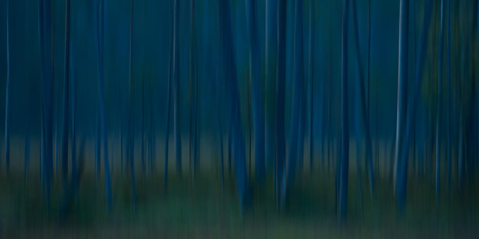 Abstrakt skog av Terje Kolaas