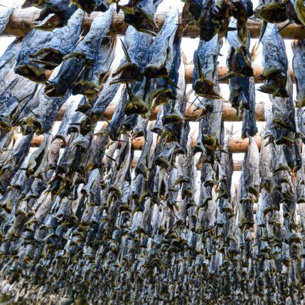 Tørrfisk - havets gull, fotokunst veggbilde / plakat av Terje Kolaas