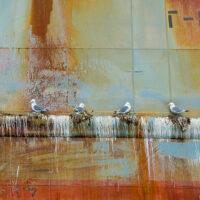 Måker på rustent skipsskrog, fotokunst veggbilde / plakat av Terje Kolaas