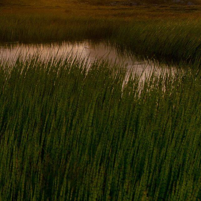 Solnedgang på Træna, fotokunst veggbilde / plakat av Terje Kolaas