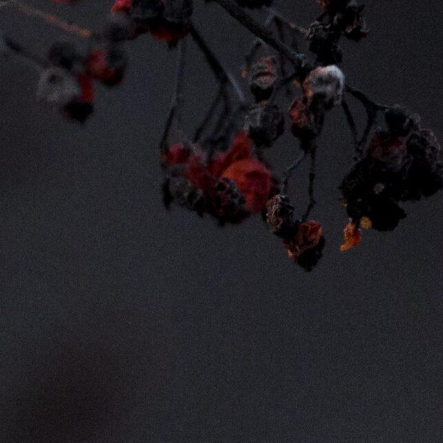 Bjørkefink mister bær, fotokunst veggbilde / plakat av Terje Kolaas