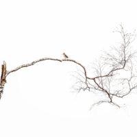 Liten fugl på stor bjørk, fotokunst veggbilde / plakat av Terje Kolaas