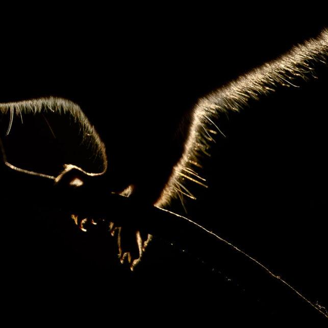 Ekornets omriss, fotokunst veggbilde / plakat av Terje Kolaas