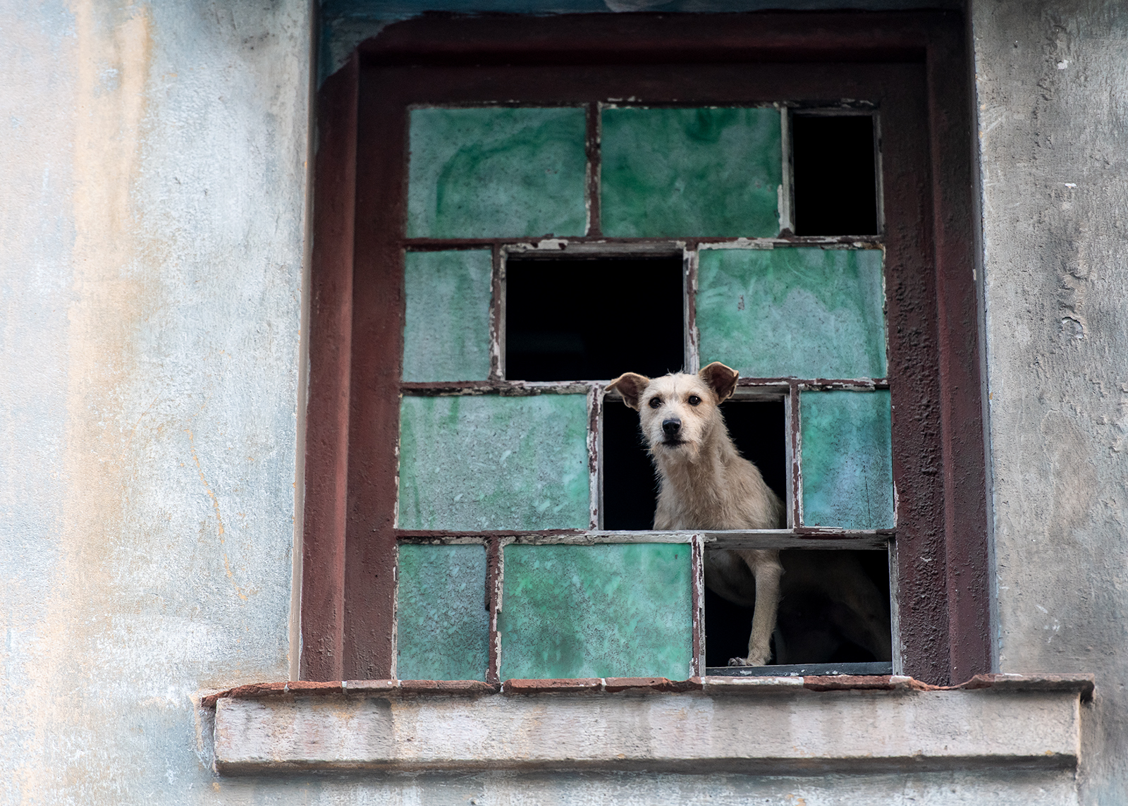 Hund i vindu av Terje Kolaas